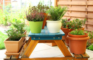 The benefits of container gardening Cookes Storage Service